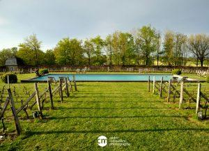piscine dans les vignes